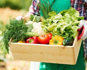 Dicas de como montar um hortifruti com qualidade